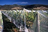 "Photography Poster - Bird netting protecting grapevines near Harvest - 24""x16.5"""