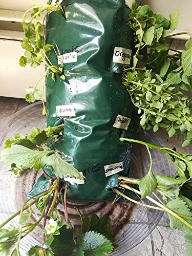 Rivchell Indoor Outdoor All Seasons Planters for Herbs Strawberries Fruits Cilantro (1)