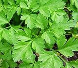 italian parsley - Italian Giant Parsley Seeds, 200+ Premium Heirloom Seeds, ON SALE!, (Isla's Garden Seeds), Non Gmo Organic, Highest Quality!