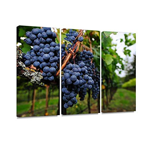 (Ripe Grapes Ready for Harvest Print On Canvas Wall Artwork Modern Photography Home Decor Unique Pattern Stretched and Framed 3 Piece)