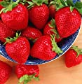 Tristar Everbearing Strawberry 10 Bare Root Plants - Sweetest & Most Aromatic