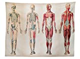horse muscle chart - vipsung Human Anatomy Tablecloth Vintage Chart of Body Front Back Skeleton and Muscle System Bone Mass Graphic Dining Room Kitchen Rectangular Table Cover Ruby Cream