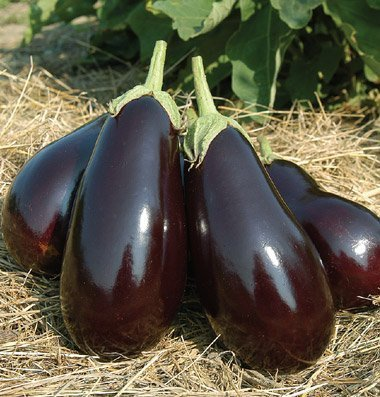 David's Garden Seeds Eggplant Galine D2829DGT (Black) 50 Hybrid Seeds
