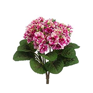 "12"" African Violet Bush Fuchsia Cream (pack of 12) 27"