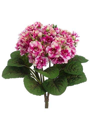 12-African-Violet-Bush-Fuchsia-Cream-pack-of-12