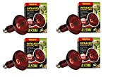 Exo Terra Heat-Glo Infrared Spot Lamp, 150-Watt/120-Volt (4 Pack)