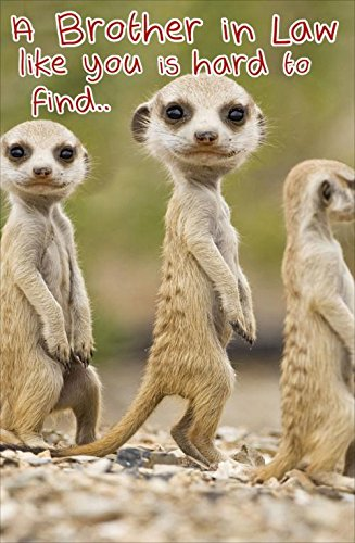 Hanson White Brother In Law Birthday Card Meerkats 725 X 475