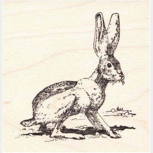(Jack Rabbit Rubber Stamp Desert)