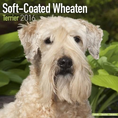 (Soft-Coated Wheaten Terrier Calendar - Only Dog Breed Soft-Coated Wheaten Terrier Calendar - 2016 Wall calendars - Dog Calendars - Monthly Wall Calendar by Avonside )