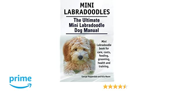 Mini Labradoodles The Ultimate Mini Labradoodle Dog Manual