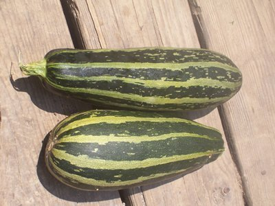 David's Garden Seeds Zucchini Cocozelle Italian D53116 (Green and Yellow) 25 Organic Seeds