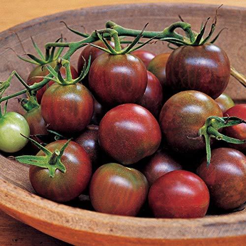 Burpee 'Black Pearl' Hybrid | Cherry Tomato | Extra Sweet Flavor | 30 Seeds