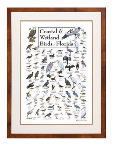 Poster - Coastal & Wetland Birds of Florida