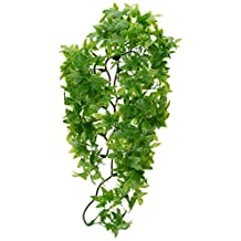 Zoo Med Laboratories SZMBU22 Natural Bushy Congo Ivy, Medium