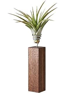 EVRGREEN | Luftpflanzen Set Deko Beton anthrazit | Dekoration für ...