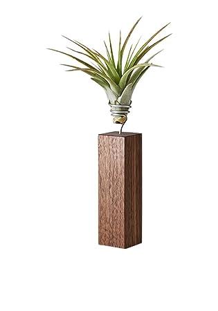 EVRGREEN Luftpflanzen Tisch-Deko Tillandsie mit Design Nuss-Baum ...