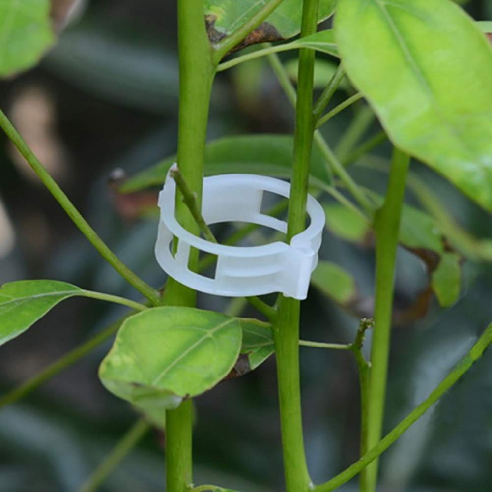 Macht Gartengem/üse aufrecht zu wachsen Tomaten Spalier Clips BonTime 50PCS Plant Support Garden Clips f/ür Rebe Gem/üse