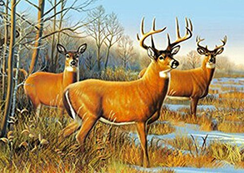 DEER UNFRAMED Holographic Wall Art-POSTERS That FLIP and CHANGE images-Lenticular Technology Artwork--MULTIPLE PICTURES IN ONE--HOLOGRAM Images Change--Technology by THOSE FLIPPING PICTURES by Those Flipping Pictures (Image #1)