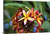 greatBIGcanvas Gallery-Wrapped Canvas entitled Plumeria flower by Douglas Peebles 48''x32''