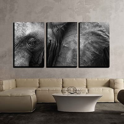 3 Piece Canvas Wall Art - Close Up Detail of an African Elephant Eye and Ear - Modern Home Art Stretched and Framed Ready to Hang - 16