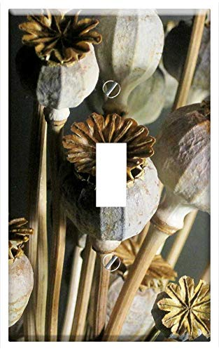 (Switch Plate Single Toggle - Seed Pods Poppy Dried Bleached Textured Natural)