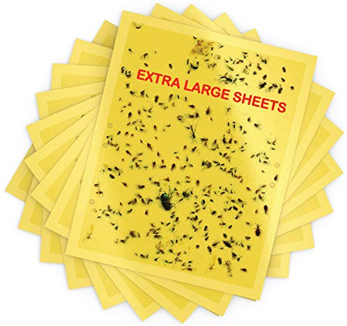Extra Large Dual-Sided Yellow Sticky Traps 8x10inch- Sticky Traps for Fungus Gnat, Flies , Aphids, Leaf Miners, Whiteflies, Thrips and Other Flying Insects
