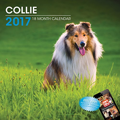 LittleGifts Collie 2017 Calendar (3051)