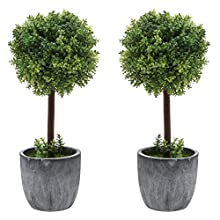 Set of 2 Small Realistic Artificial Boxwood Topiary Trees / Faux Tabletop Plants w/ Gray Ceramic Pots