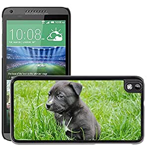 Super Stella Slim PC Hard Case Cover Skin Armor Shell Protection // M00147632 Puppy Young Dog Dog Cute Pet // HTC Desire 816
