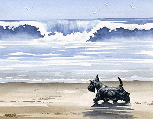 Scottish Terrier At the Beach Dog Art Print by Artist DJ Rogers (Terrier Scottish Dog Art)