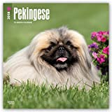 Pekingese 2018 12 x 12 Inch Monthly Square Wall Calendar, Animals Asian Dog Breeds (English, French and Spanish Edition)