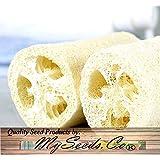Big Pack - (100) Luffa Luffa Cylindrica Loofah Seeds - Dishcloth Or Luffa Gourd Fruits Grow To Approx. 2' - Non-GMO…