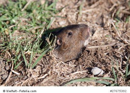 topillo rata Repelente de alta frecuencia para exteriores hormiga Efectivas vibraciones por ultrasonido contra rat/ón ISOTRONIC/® Ahuyentador de topos Paquete de 1 piezas serpiente