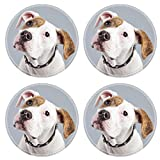 american bulldog puppies for sale - Liili Round Coasters Non-Slip Natural Rubber Desk Pads Puppy american bulldog white with red spots isolated against grey background Studio portrait Image ID 21625
