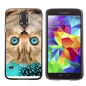 PC/Aluminum Funda Carcasa protectora para Samsung Galaxy S5 SM-G900 American Shorthair Surprised Cat Blue / JUSTGO PHONE PROTECTOR