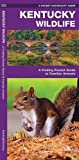 Kentucky Wildlife: A Folding Pocket Guide to Familiar Species (A Pocket Naturalist Guide)