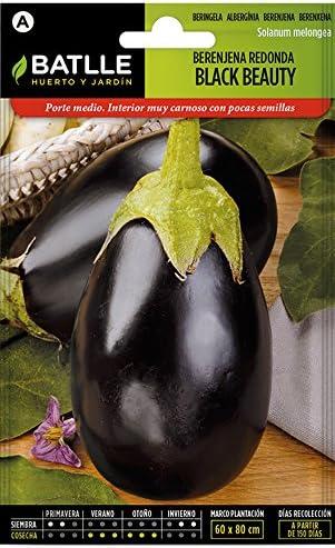 Semillas Hortícolas - Berenjena redonda negra Black Beauty ...