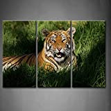 3 Panel Wall Art Bengal Tiger Panthera Tigris Bengalensis Laying In Thick Grass Openmouthed Painting The Picture Print On Canvas Animal Pictures For Home Decor Decoration Gift piece