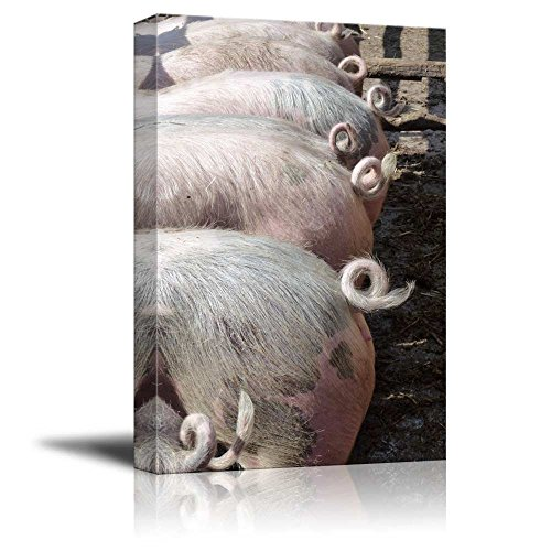 The Curling Tails of Young Pigs Animal Livestock Photograph Wall Decor