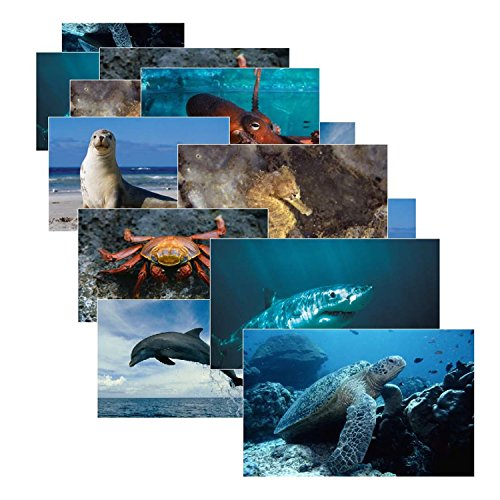 Stages Learning Sea Life Posters Real Photo Classroom Decorations for Preschool Bulletin Boards & Circle Time 14 Large Picture Cards]()