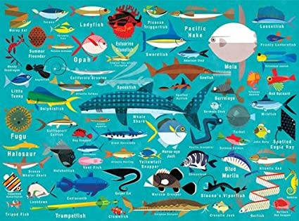 amazon com mudpuppy ocean life puzzle 1000 piece mudpuppy paul