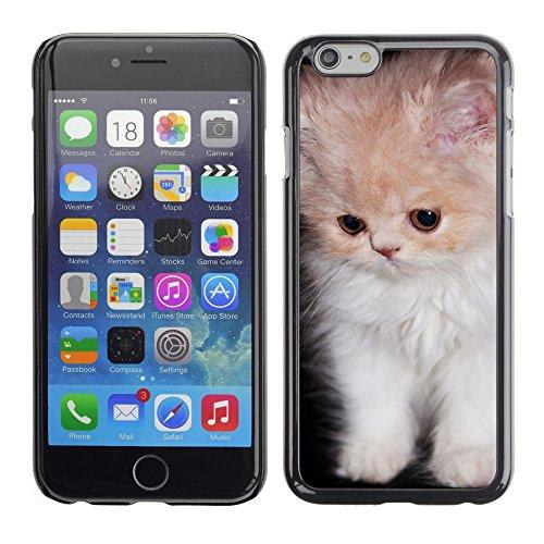 """Premio Sottile Slim Cassa Custodia Case Cover Shell // V00003218 chaton persan mignon // Apple iPhone 6 6S 6G PLUS 5.5"""""""