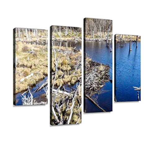 (Beaver Dam in Tierra del Fuego National Park, Ushuaia, Argentina Canvas Wall Art Hanging Paintings Modern Artwork Abstract Picture Prints Home Decoration Gift Unique Designed Framed 4 Panel )