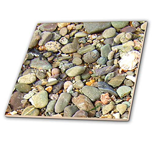 3dRose ct_157797_1 Pebble Beach Texture Photo-Little Stones and Seashells-Nautical Colorful Grey Gray Brown Rocks-Ceramic Tile, 4-Inch ()