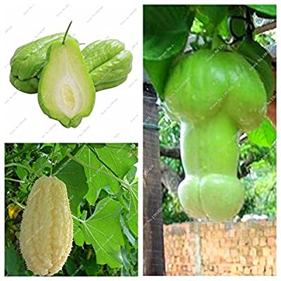 Outdoor Plants Garden Ornamental Pumpkin Chayote Seed Bonsai Potted Plant Green Fruit Vegetables Seed High-nutrition 10 Pcs : Garden & Outdoor