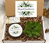 Sympathy Gift Box- Sympathy Gift Ideas- Succulent Gift Ideas - Deepest Condolences - Sorry For your Loss - Live succulent and candle