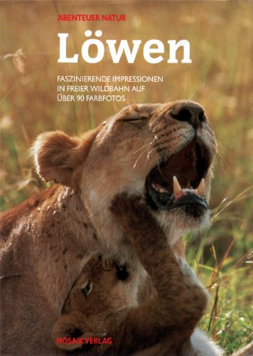 Löwen. Faszinierende Impressionen in freier Wildbahn