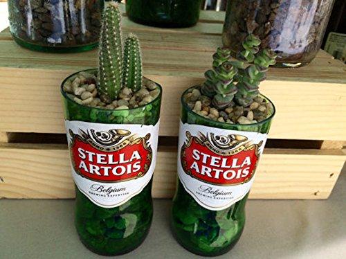 Stella Artois 12 oz Glass Bottle Succulent & Cactus Planter