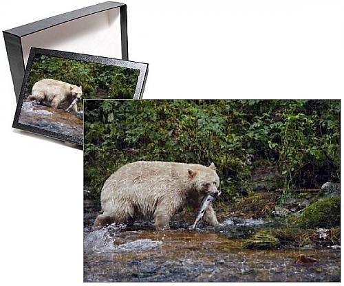 kermode bear - 4