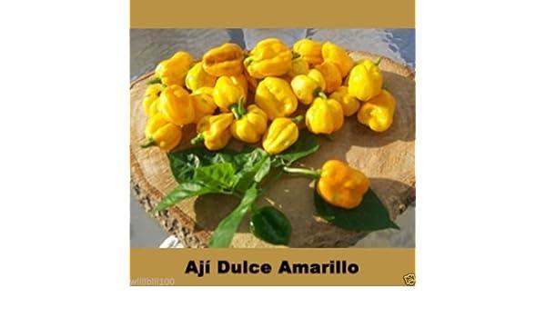 Aji Dulce Amarillo, semillas de pimiento (C. chinense) de Venezuela: Amazon.es: Jardín